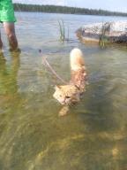 Meet Jesper, the ski loving adventure cat.