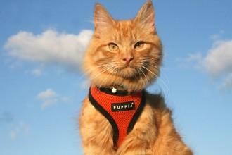 Jesper-Adventure-Cats-6-of-9-330x220