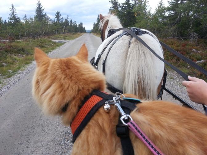 Jesper-Adventure-Cats-7-of-9